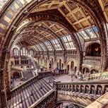 Museo Historia Natural London