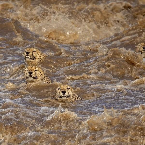 Leopardos Mojados